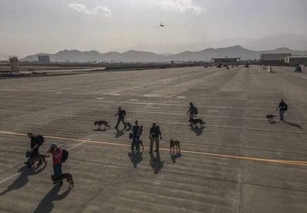Американцы эвакуировали из Афганистана служебных собак, оставив в Кабуле украинских военных