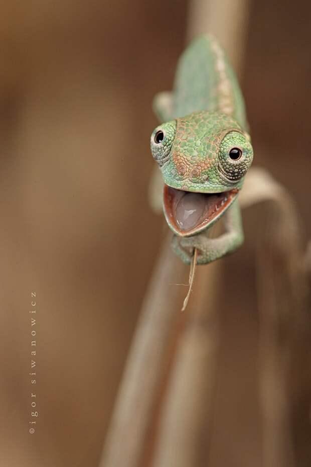 cute-baby-chameleons-5830b9556b208__700