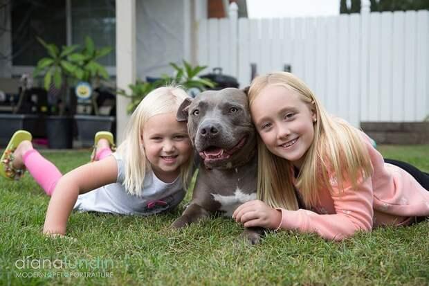 Бездомная собака едва не попала под машину, но вмешался счастливый случай Счастливый конец, животные, собаки, спасение