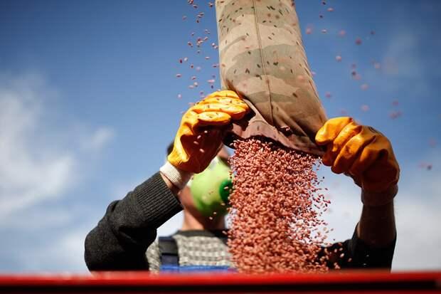 Импорт посевного материала с генно-модифицированными организмами запрещается, а посевы будут проверяться на наличие ГМО