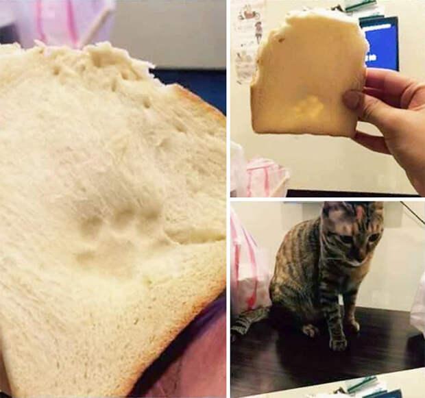 11 угарных фото животных, которых поймали на воровстве еды