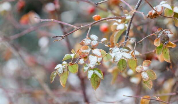Мороз исолнце. КОмской области медленно подкралась зима