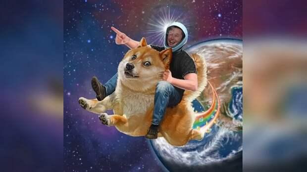 Разработчики Dogecoin признались, что работают с Илоном Маском с 2019 года