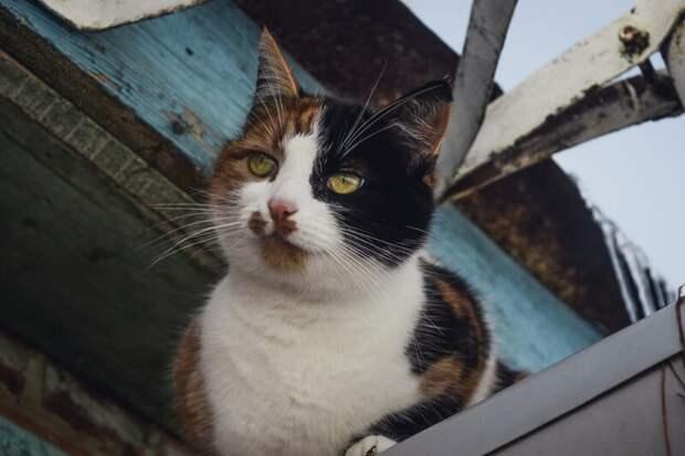 Всегда приятно занять местечко по выше Хвостатые, братья наши меньшие, город, кот, кошка, улица, уличные кошки, эстетика