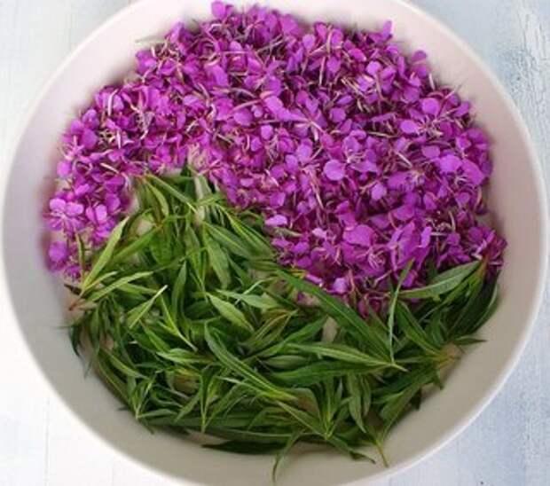 Как приготовить Иван-чай, для заваривания вкусного и ароматного чая.