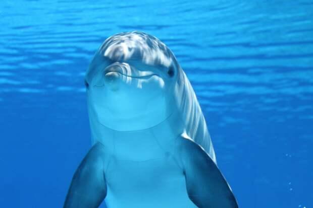 Минсельхоз планирует запретить вывоз из России китов и дельфинов