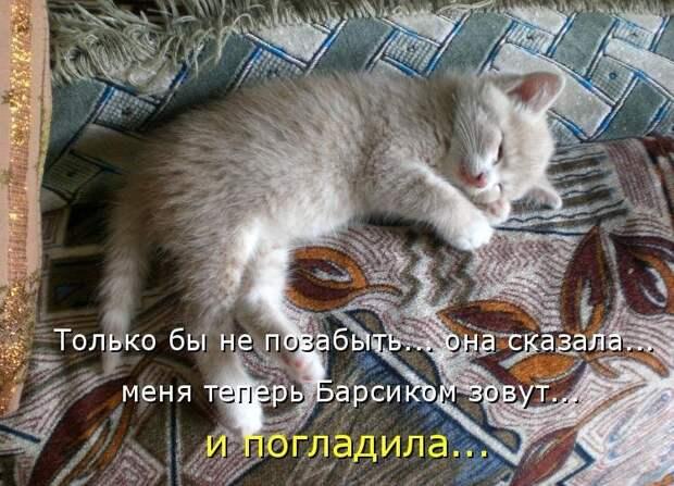 1450431433_kotomatrica-3