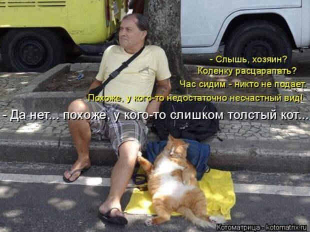 1556890789_kotomatricy-9 (500x375, 154Kb)