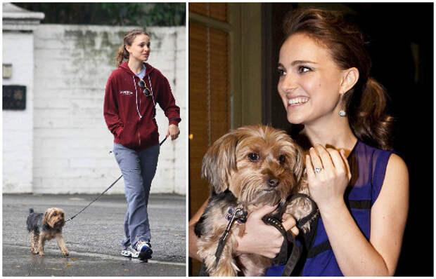 Натали Портман любит гулять с собакой