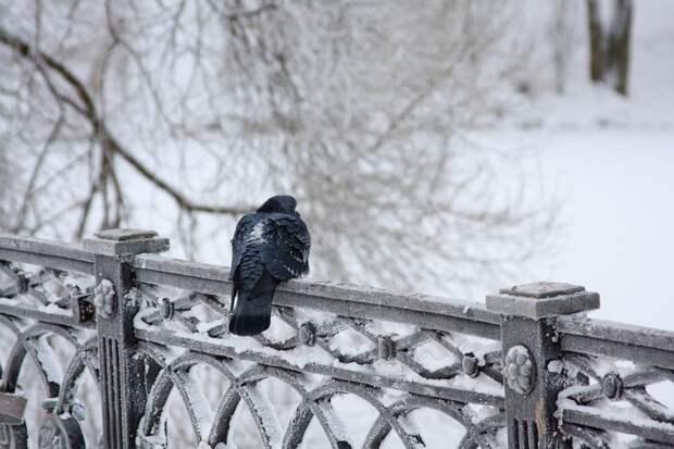 Похолодание начнется в Удмуртии с первых дней зимы