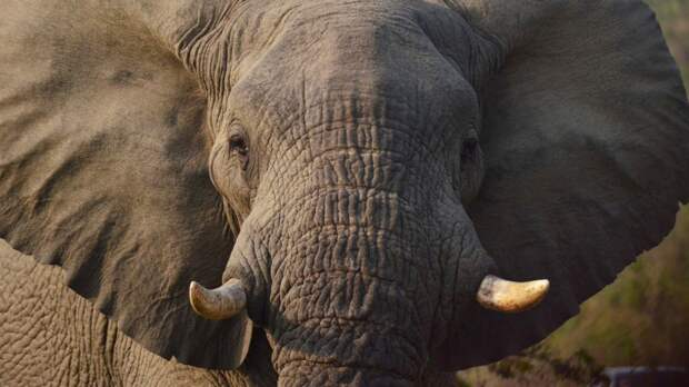 Апелляционный суд в США впервые рассмотрит иск слонихи к зоопарку