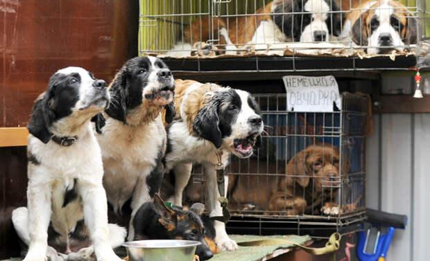 Запрет на продажу зверей в магазинах. Как Госдума пытается защитить права животных