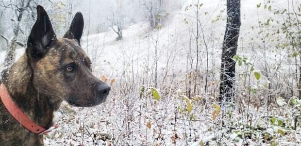 Изучает свой первый снег в жизни