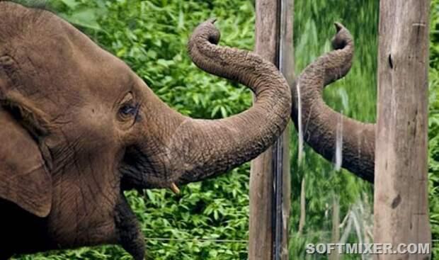 elephant-mirror-test-2