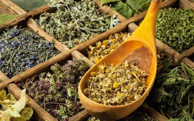 Какие лекарственные растения помогут для укрепления общего здоровья