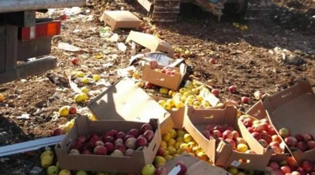 Россия сделала так, что польские яблоки не продаются даже в Латвии