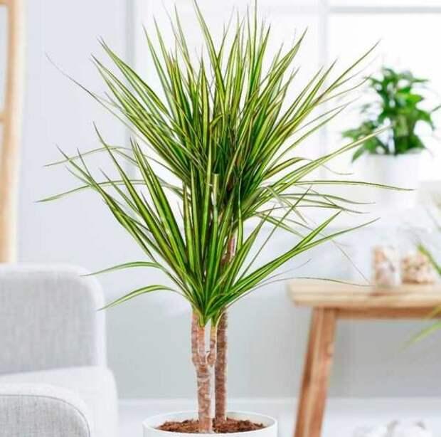 Комнатные растения, которые превосходно очищают воздух в доме