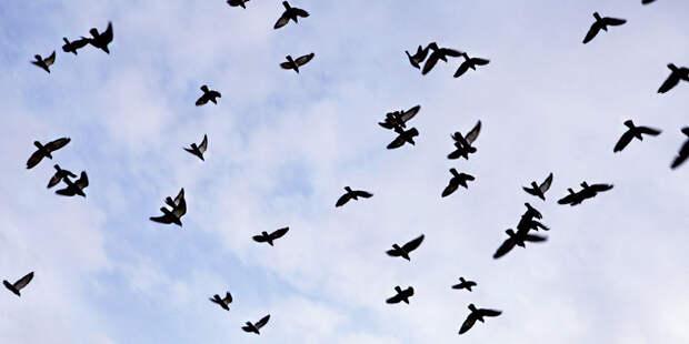 Сезон миграции: сохраняется высокий риск столкновения птиц с самолетами