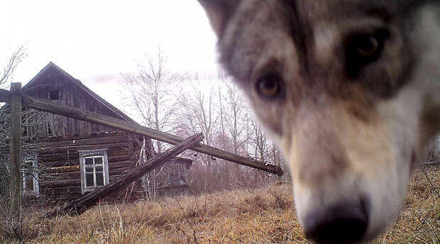 Мир шокирован тем, что обнаружили ученые в Чернобыле