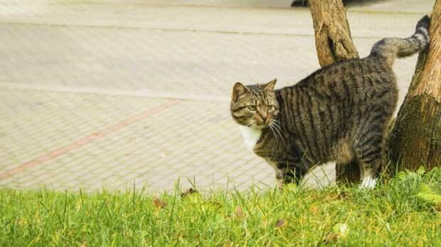 Хозяйка кота была сбита с толку тем, что ее питомец начал приносить домой
