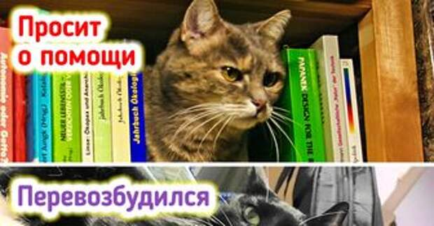 11 секретов поведения кошек, о которых редко знают даже опытные заводчики