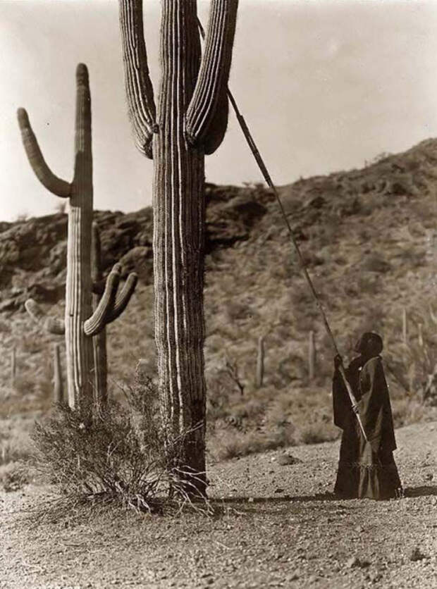 Местная жительница срезает кактус с помощью огромной палки.