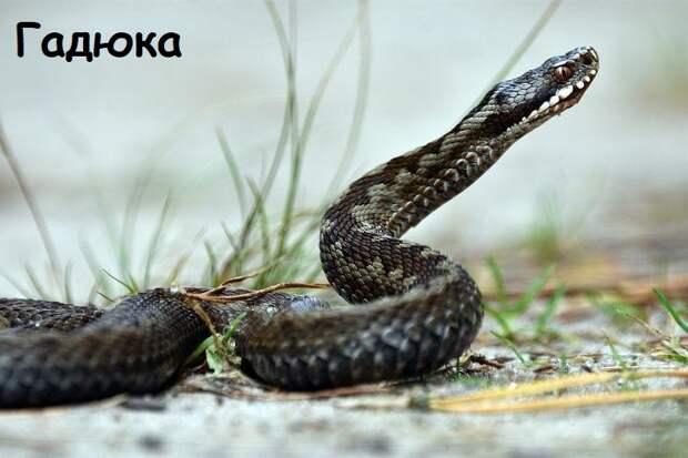 Памятка по животным класса пресмыкающиеся (рептилии) экзотических видов