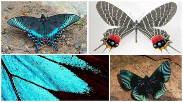 Вес бабочки равен весу двух лепестков розы. бабочки, интересное, красота, насекомые