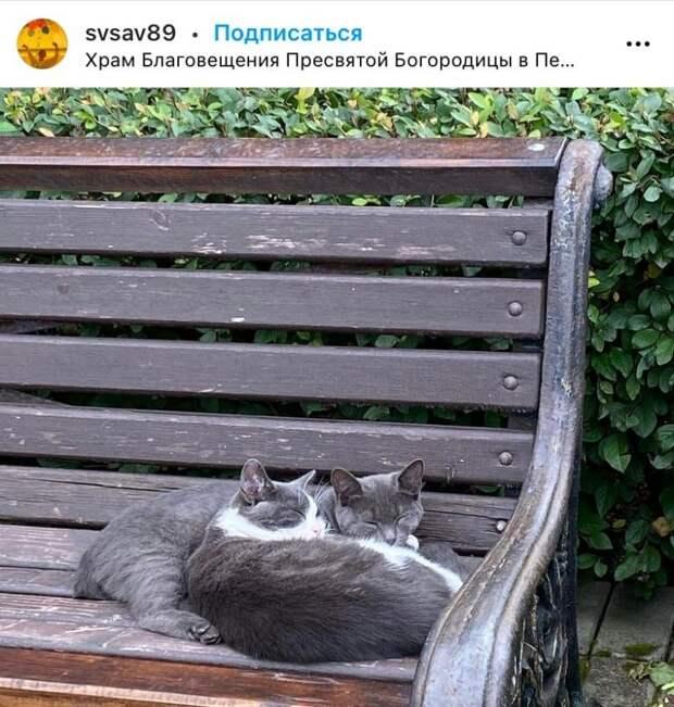 Фото дня: пушистая парочка сладко спит в саду храма в Петровском парке