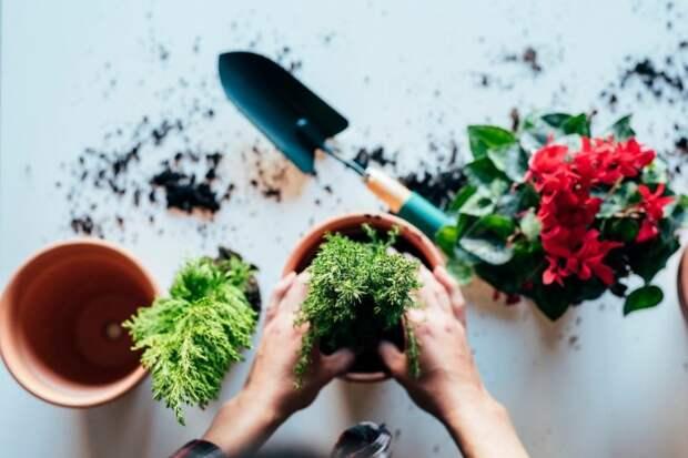 Применение дрожжей в комнатном цветоводстве