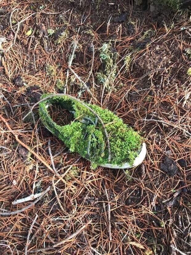 10. «Ботинок в лесу» в мире, подборка, природа, удивительно, фото