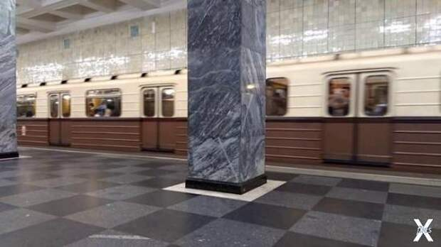 Древние обитатели московского метро, которым миллионы лет, у нас прямо под глазами