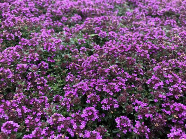 Альтернатива газону: 6 отличных и красивых идей
