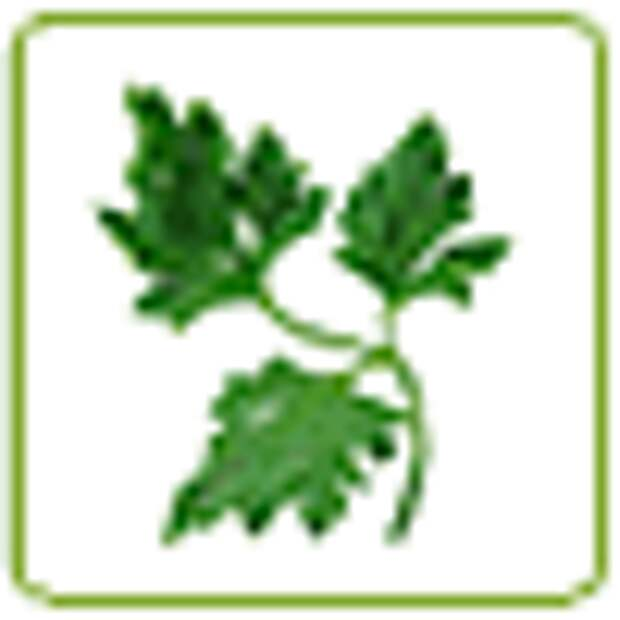 Домашняя кабачковая икра, рецепт с фото