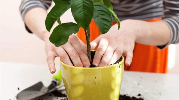 Как помочь растению перенести пересадку: простые советы