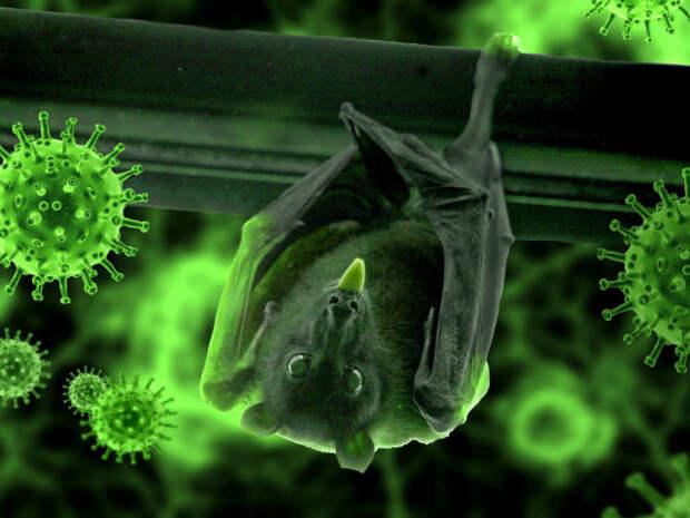 летучая мышь и клетки вируса