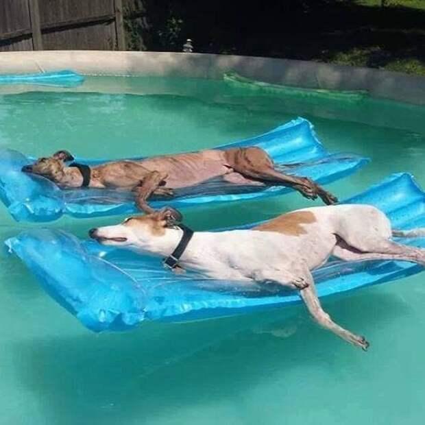 Животные умеют отдыхать летом