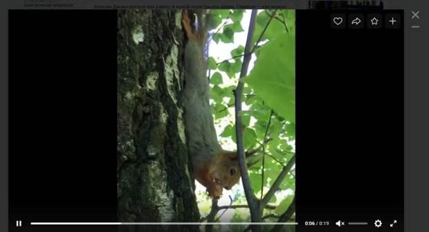 Фото дня: в Джамгаровском парке белка обедала вверх ногами