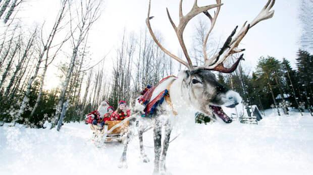 А еще в селе можно устроить необыкновенный Новый Год с катанием на оленях весело, деревня, интересно, новый год, село, юмор