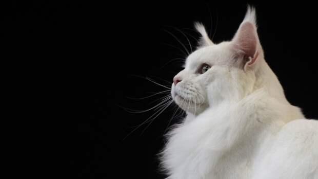 Житель Приморья расстрелял домашнего кота из пневматики