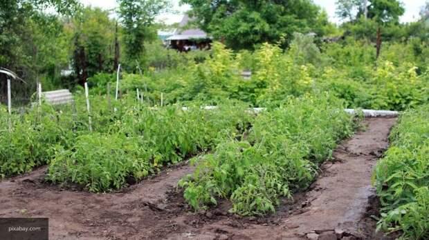 Назван способ, как избавиться от сорняков навсегда