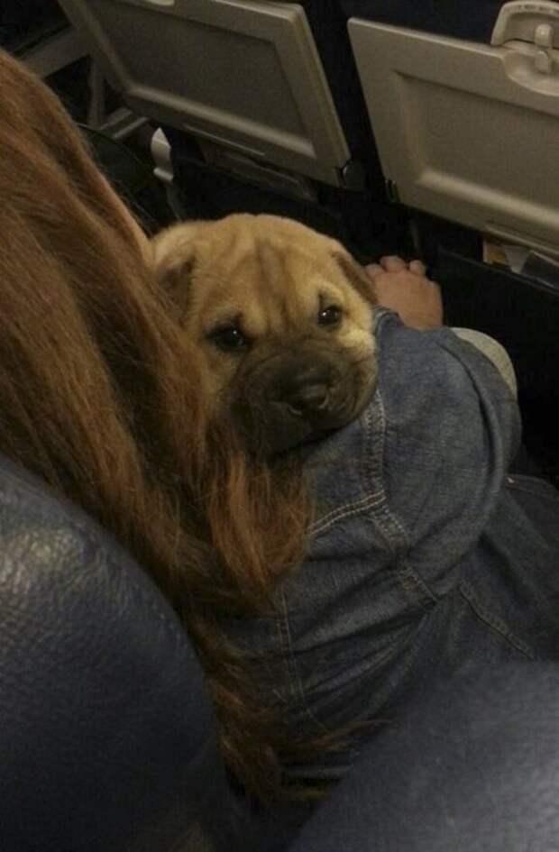 Знаешь, хозяйка, на земле все-таки как-то понадежнее... животные, забавно, летайте самолетами, мило, пассажиры, самолет, собаки, хвостатые пассажиры