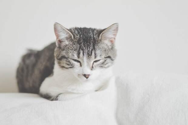 «Теперь она никогда не станет мамой»: кошка Мася принесла с прогулки «сыночка»