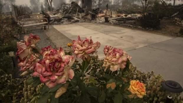 Пожары на Западном побережье США: 31 погибший, десятки тысяч эвакуированных, въедливый смог