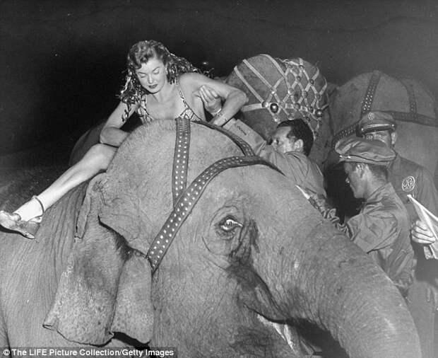 Из-за постоянных тяжб с защитниками животных, цирк отказался от выступлений со слонами, а животные были направлены в заповедник в штате Флорида закрытие, сша, цирк
