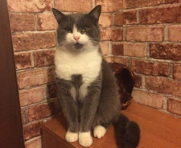 Найти серого кота в темноте было довольно непросто. Но в свете фонарика засветились два глаза, полные надежды на спасение.