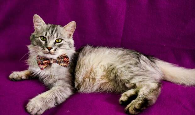 Кот был не в силах открыть свои глаза и замерзал на улице волонтер, истории спасения, история спасения, кот, кошка, приют