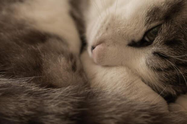 my cat by Yutaka  Takahashi 高橋ユタカ on 500px.com