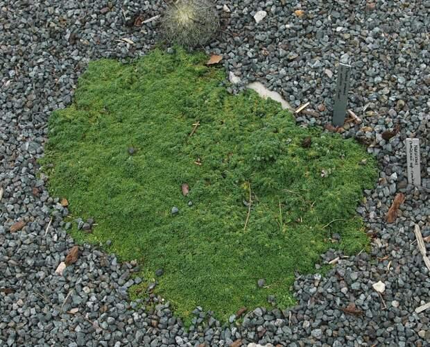 6 лучших альтернатив газону