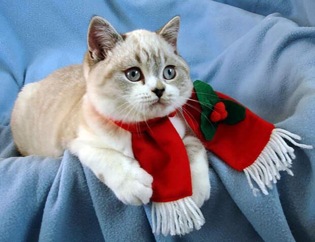 Кошка сделана из меха, из желаний и загадки - мне нужна такая кошка - это странное созданье!..